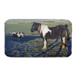 Two horses on Hackpen hill in North Wiltshire iPhone 3 Cases