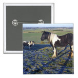 Two horses on Hackpen hill in North Wiltshire Pinback Button