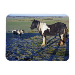 Two horses on Hackpen hill in North Wiltshire Rectangular Photo Magnet