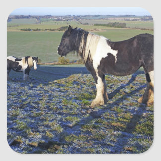 Two horses on Hackpen hill in North Wiltshire Square Sticker