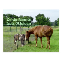 Two Horses, On the fence in Inola Oklahoma Postcard