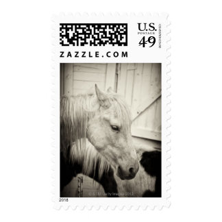 two horses outside a stable- black and white stamp
