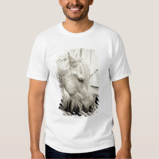 two horses outside a stable- black and white tee shirt