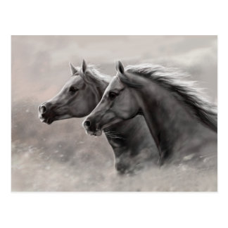 Two Horses Painting Gift Black Stallions Postcard