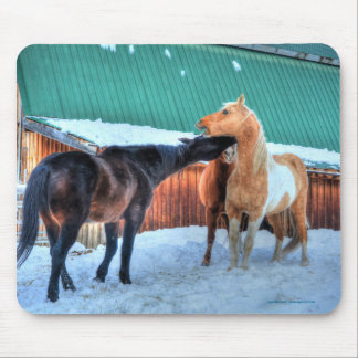 Two Horses Playfighting Funny Equine Photography Mouse Pad