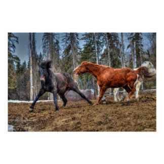 Two Horses Playfighting Horse Ranch Equine Photo Poster