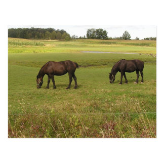 Two Horses Post Card