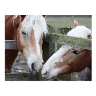 Two Horses Postcard