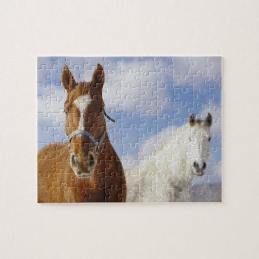 Two Horses Puzzle