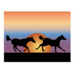 Two horses running against a sunrise post cards