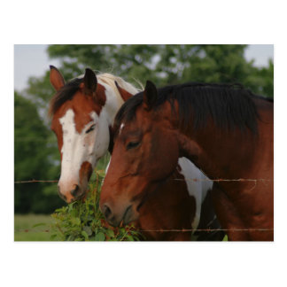 Two Horses Sharing Postcard