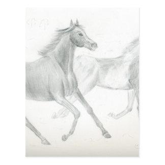 two horses sketch - Gunilla Wachtel Postcard