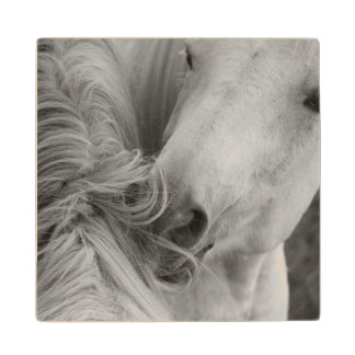 Two Horses Social Grooming B&W Equine Photography Wood Coaster