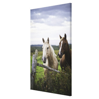 Two horses stand near fence in farm field of off canvas print