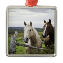 Two horses stand near fence in farm field of off metal ornament