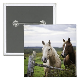 Two horses stand near fence in farm field of off pinback button