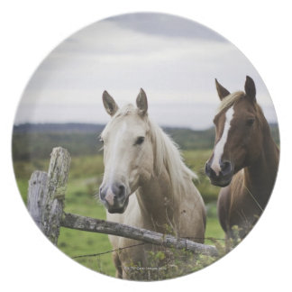 Two horses stand near fence in farm field of off party plate