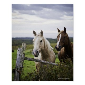 Two horses stand near fence in farm field of off poster