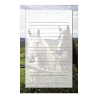 Two horses stand near fence in farm field of off stationery