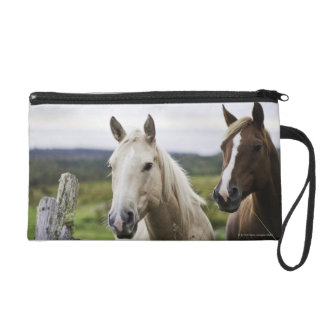 Two horses stand near fence in farm field of off wristlet purse