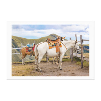 Two Horses Tied at the Top of Mountain Canvas Print
