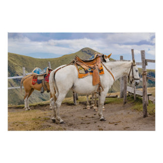 Two Horses Tied at the Top of Mountain Poster