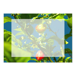 two hot peppers green foliage blue back.jpg cards