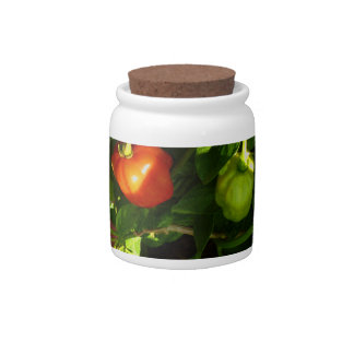 two hot peppers on the plant candy jar