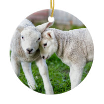Two hugging and loving white lambs ceramic ornament