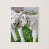 Two hugging and loving white lambs jigsaw puzzle