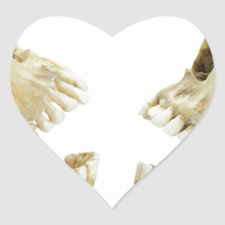 Two human skulls opposite of each other heart sticker