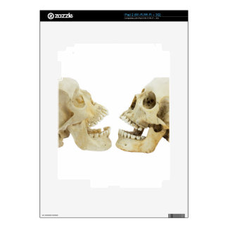Two human skulls opposite of each other iPad 2 decal