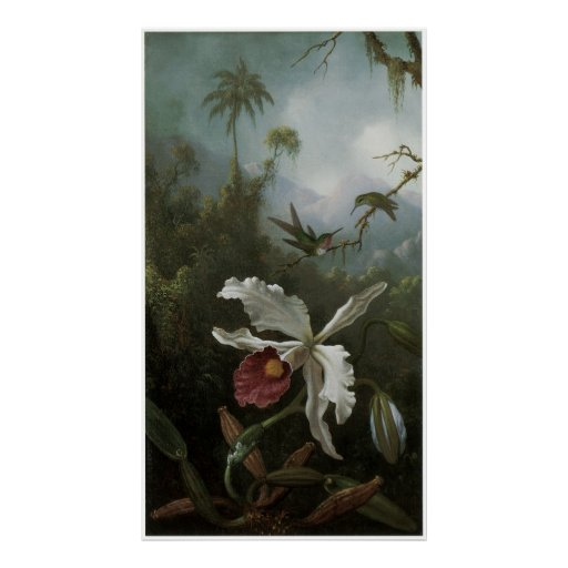 Two Hummingbirds above a White Orchid, 1870s Posters