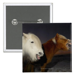 Two Icelandic horses 2 Inch Square Button