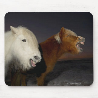 Two Icelandic horses Mouse Pad