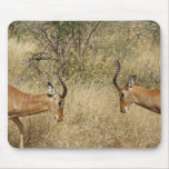 Two impalas fighting mouse pads