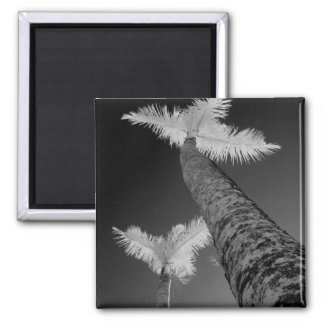 Two infrared palm trees. magnet