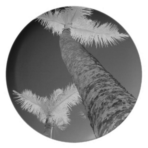 Two infrared palm trees. plates