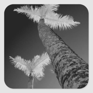Two infrared palm trees. square sticker
