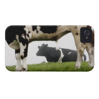 two iPhone 4 covers