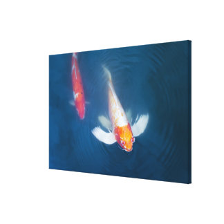 Two Japanese koi fish in pond Gallery Wrap Canvas