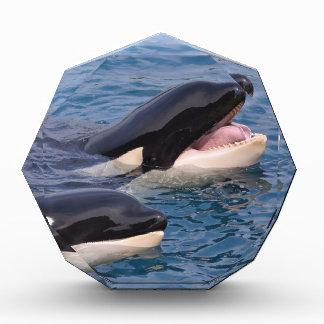 Two killer whales acrylic award