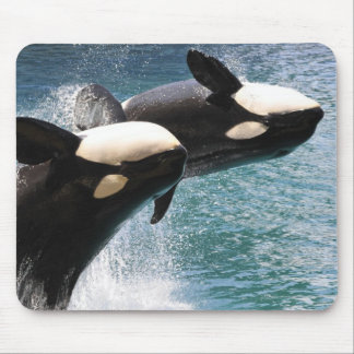 Two killer whales jumping out of water mouse pad