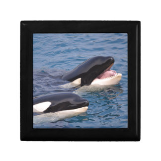 Two killer whales keepsake box