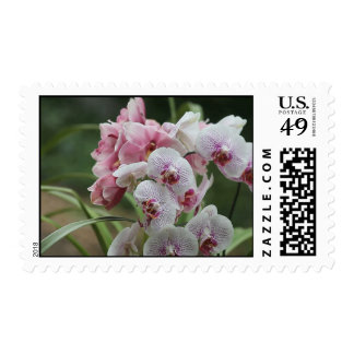 two kinds of orchids postage stamp
