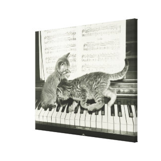 Two kitten playing on piano keyboard, (B&W) Canvas Print