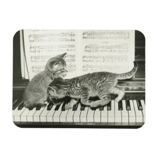 Two kitten playing on piano keyboard, (B&W) Magnet