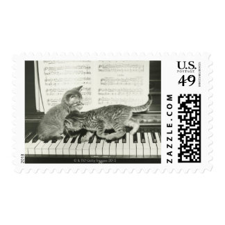 Two kitten playing on piano keyboard, (B&W) Postage