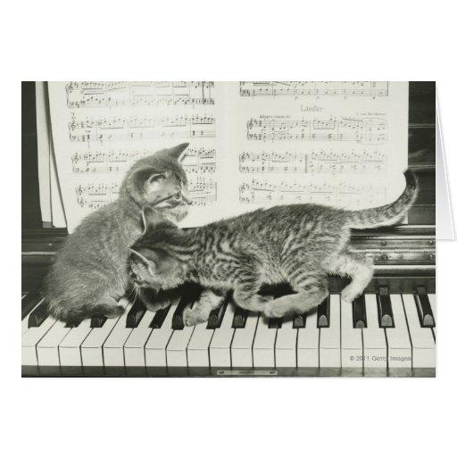 Two kitten playing on piano keyboard greeting card