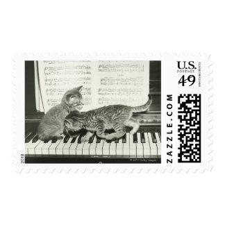 Two kitten playing on piano keyboard postage